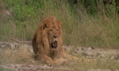 Strážce lvů_To Walk with Lions (1999)(CZ)[TvRip][720p].mkv